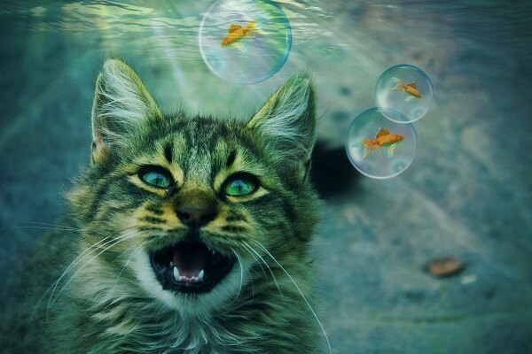 Cat Dream Meaning and Interpretation: What Do Dreams About Cats Symbolize?