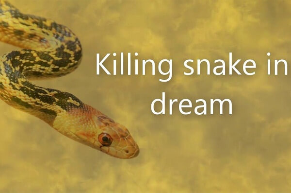 Killing a Snake in Your Dream Meaning and Interpretation