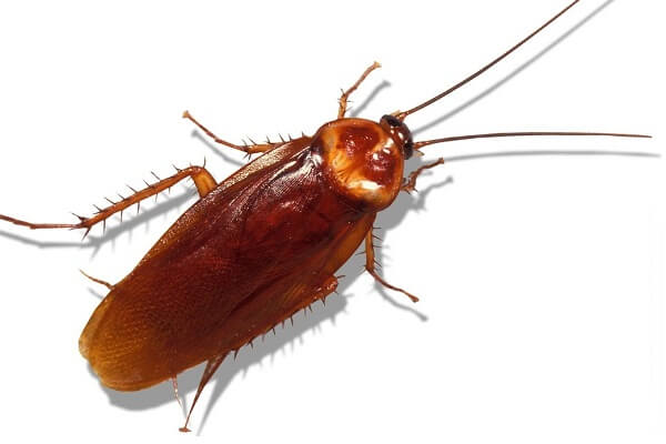 Dream Interpretation of Cockroach: What does a cockroach symbolize?