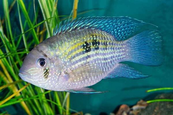 Fish Dream Meaning and Dream Interpretation: What Does It Mean?