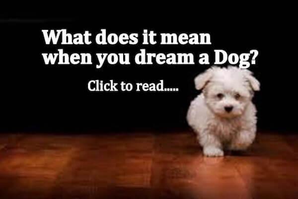 Dog Dream Meaning: Let's Interpret Dog Dream!