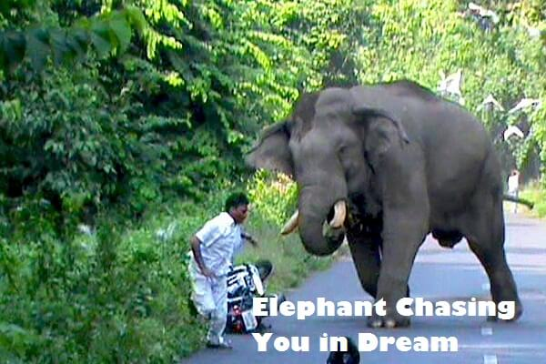Dream Meaning of Elephant Chasing You: Let's Interpret It!