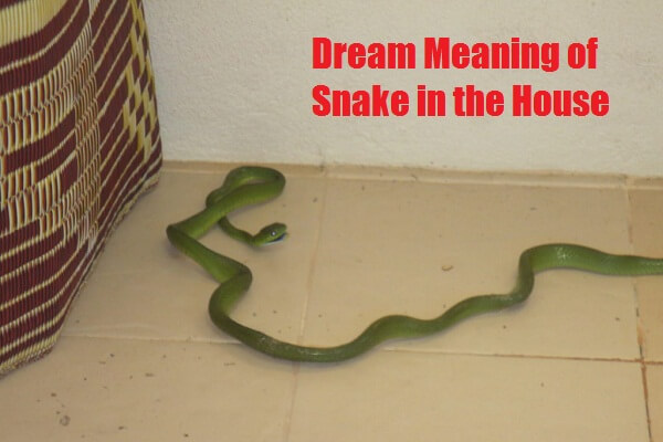 Dream Meaning of Snake in the House: What Does It Mean to See Snake in Dream?