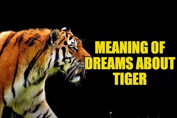 Tiger Dream Interpretation: What Does It Mean?