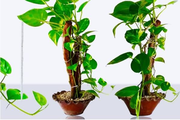 Money Plant in Dream Meaning: What does dreaming about money plant mean?
