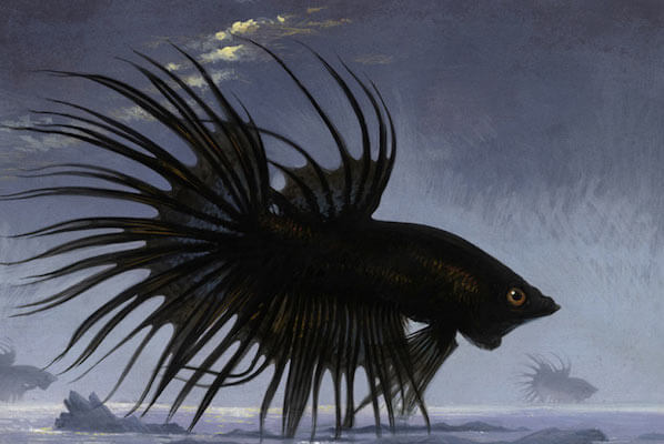 Seeing Black Fish in Dream Meaning and Interpretation