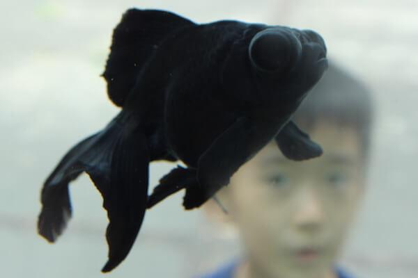 Black Fish Dream