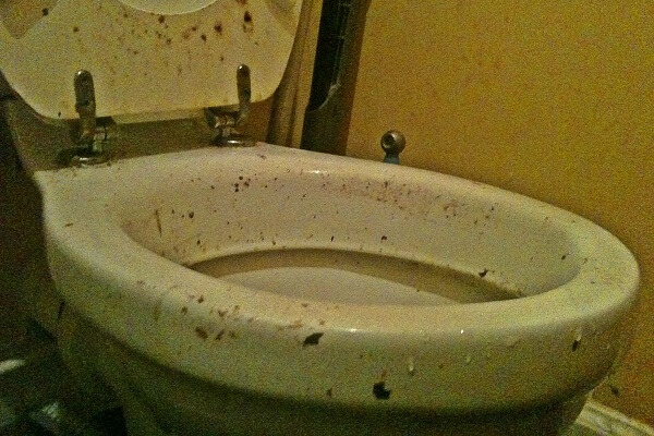 Dirty Toilet Dreams Meaning: Let's Interpret Now!